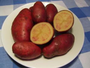Perunalajike 'Rote Emallie'