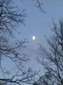Kasvava kuu
