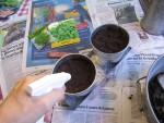 Hedelmä-, kukka- ja lehtipäivien kylvöpuuhia