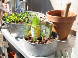 Taimia istutuspöydällä