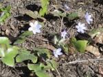 Luontohavainnot puutarhakalenterina (2): keskikevät