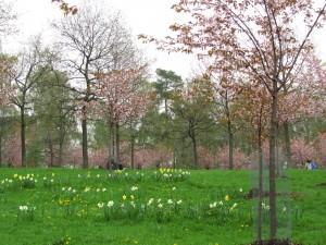 Rusokirsikoita ja kevätkukkia