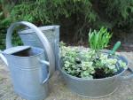 Töitä puutarhassa: istuttaminen