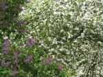 Luontohavainnot puutarhakalenterina (4): alkukesä