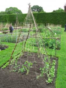 Hernetiipii kasvimaalla, Royal Botanic Garden Edinburgh