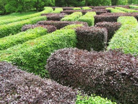 Scone Palacen labyrintti
