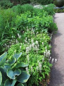 Slate Garden, Cawdor Castle Gardens: kalpeita istutuksia