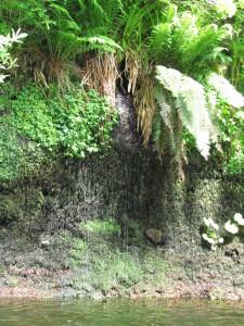 Wild Garden, Cawdor Castle Gardens: puron törmää