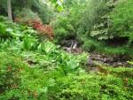Rhododendron-puutarhat: Skotlanti 2012 (2)