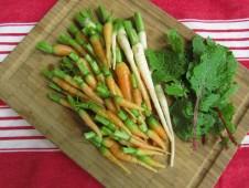 Porkkanaa, palsternakkaa ja lehtiretiisiä