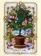 Kuukauden kasvi: joulukuusi