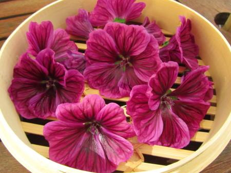 Maurinmalvan kukkia