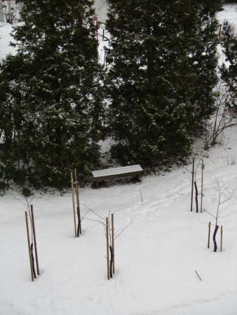 Talvinen kirsikkapuisto