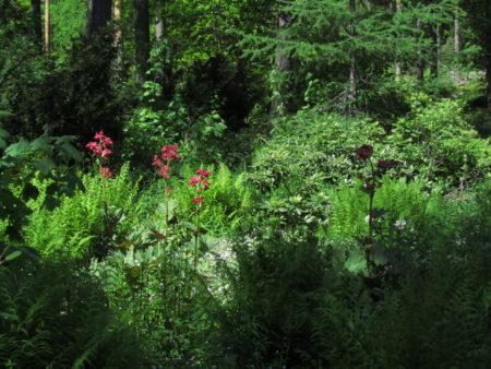 Mustilan arboretumin perennoja