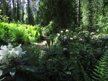 Mustilan puulajipuistosta