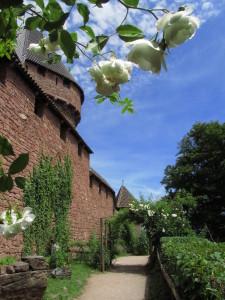 Haut-Kœnigsbourgin keskiaikaiseen puutarhaan