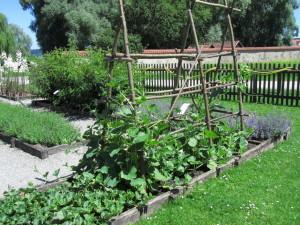 Melonit ja pullokurpitsat Strabon yrttitarhassa