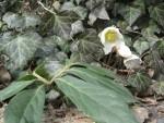 Luontohavainnot puutarhakalenterina (1): varhaiskevät