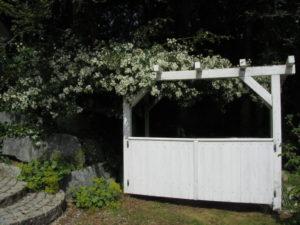 Ruusu kaunistaa kompostinurkkauksen