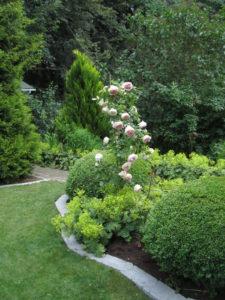 Ruusuja, poimulehtiä ja puksipuita