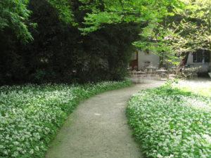 Karhunlaukkapolku Ljubljanan kasvitieteellisessä puutarhassa