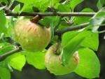 Luontohavainnot puutarhakalenterina (6): loppukesä