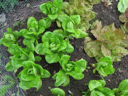 Salaattimaa