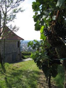 Viiniviljelmällä Hessische Bergstrassen viinialueella