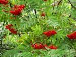 Luontohavainnot puutarhakalenterina (7): ruskasyksy