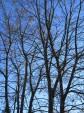 Luontohavainnot puutarhakalenterina (8): myöhäissyksy