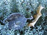 Luontohavainnot puutarhakalenterina (9): talvi