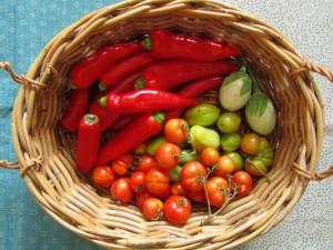 Paprikaa, tomaattia ja munakoisoa