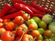 Syksyn satoa: tomaatteja, suippopaprikaa, munakoisoa
