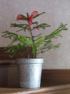 Pikku joulukuusi Annalan joulutorilla