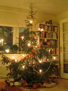 Joulukuusi omasta pihasta