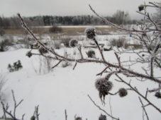 Talvi palsta-alueella