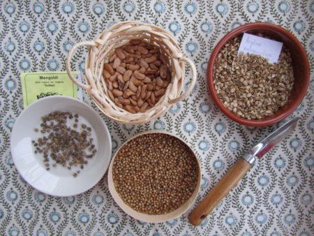 Mangoldin-, pavun-, korianterin- sekä väinönputken siemeniä