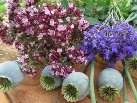 Mäkimeirami, laventeli ja unikko