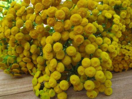 Pietaryrtin kukkia