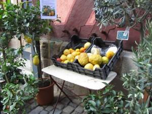Sitruspuita talvipuutarhaan