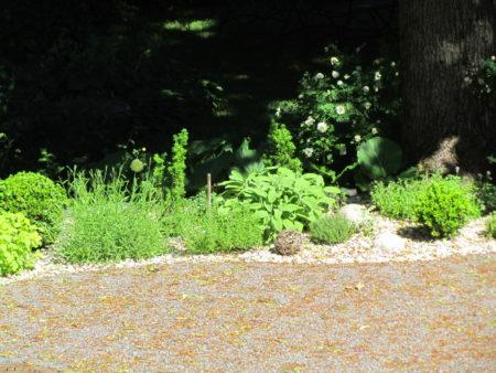 Kuvassa on yrttipenkki, jossa kasvaa laventelia, timjamia, salviaa ja puksipuita kirkkaassa auringonpaisteessa
