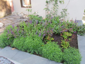 Kuvassa on sama perennapenkki, jossa kasvit ovat jo kasvaneet selvästi