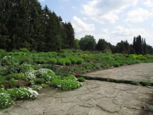 Kivikkopuutarha Tallinnan kasvitieteellisessä puutarhassa