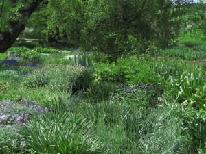 Perennat Tallinnan kasvitieteellisessä puutarhassa