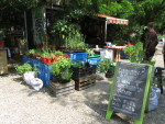 Sosiaalista puutarhanhoitoa: kaupunkiviljely (Berliini–Hampuri 2013/3)