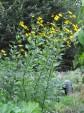 Alkusyksy palstalla ja puutarhassa