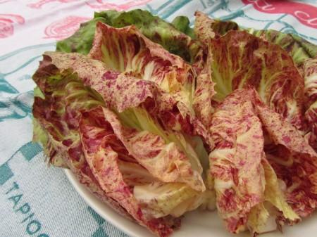 Radicchio-salaattilajike 'Variegata Precoce di Luisa'