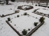 Kevättalvinen keittiöpuutarha