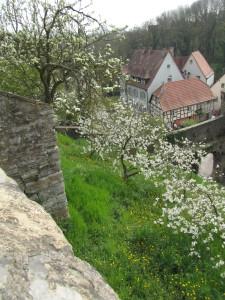 Hedelmäpuut kukkivat Bad Wimpfenissä