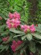 Vierailukohde: Mustilan arboretum